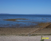 Seaweed 31 Aug 02 - 1